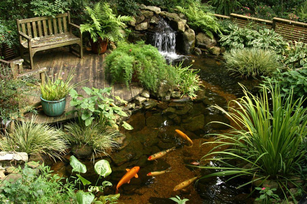 Дизайн пруда на садовом участке