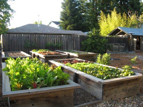 Мир тесен сад огород
