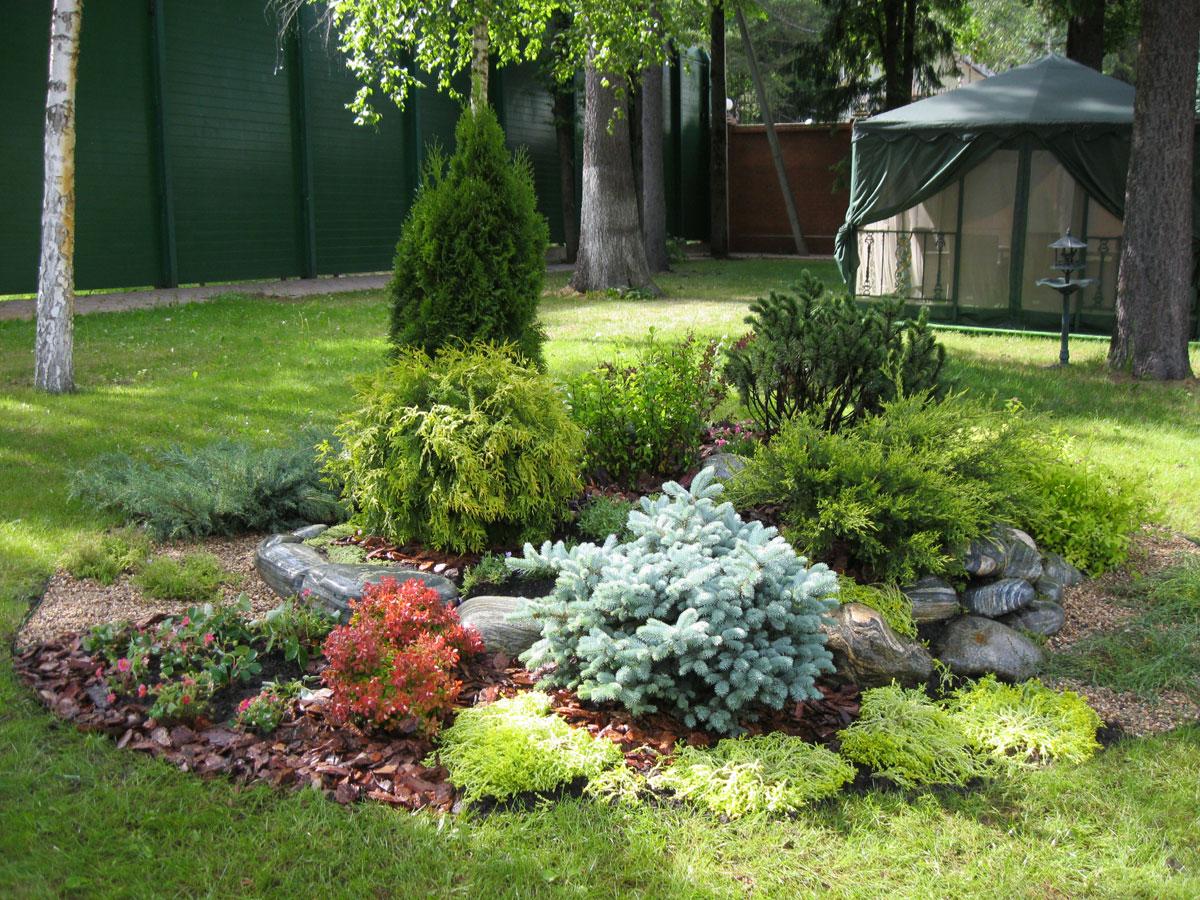 Хвойные растения в ландшафтном дизайне