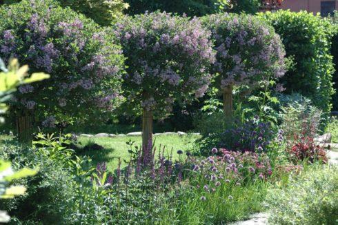 Долговечные деревья и кустарники