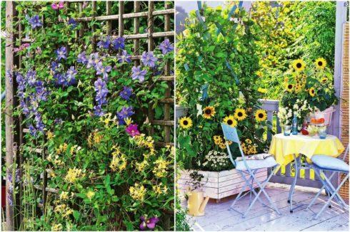 Вьющиеся растения – основной элемент озеленения территории