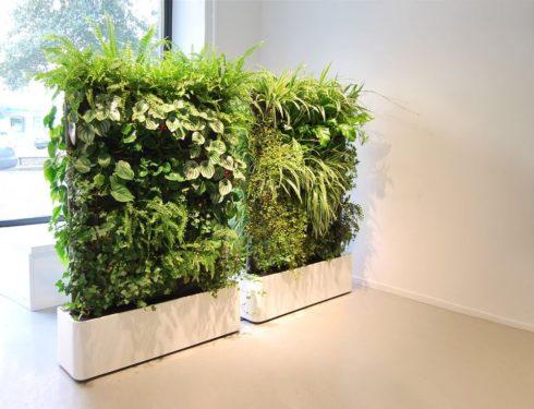 Основные задачи озеленения интерьера
