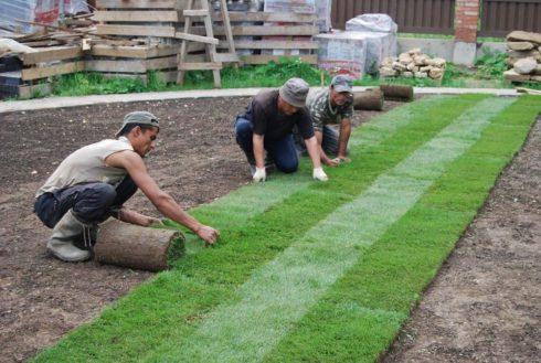 Основные этапы укладки рулонной травы своими руками