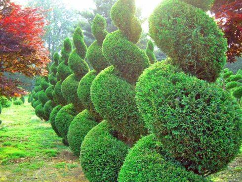 Деревья- скульптуры