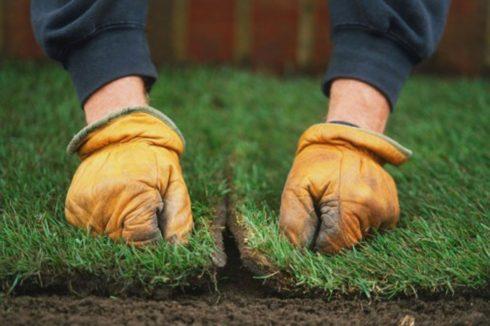 покос травы и удобрение