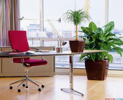 Фитодизайн – это озеленение помещения, создание его эстетического облика при помощи растений