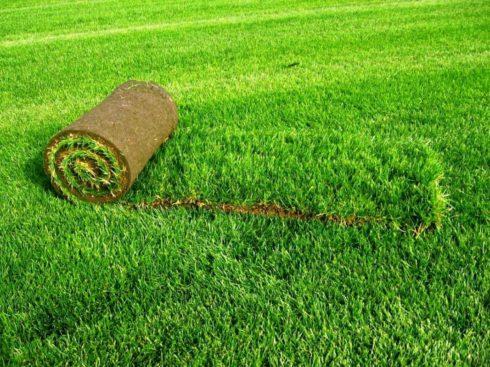 Укладка газона на участке в Нижнем Новгороде