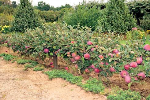 Ландшафтный дизайн сада яблоневый